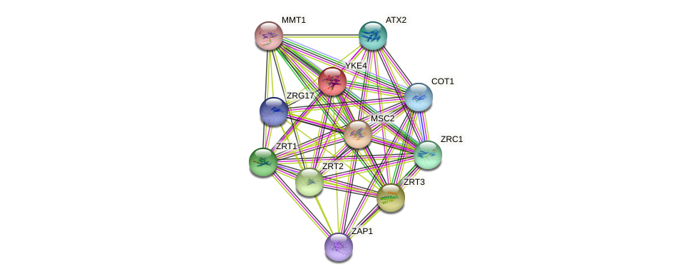 YKE4 protein (Saccharomyces cerevisiae) - STRING interaction network