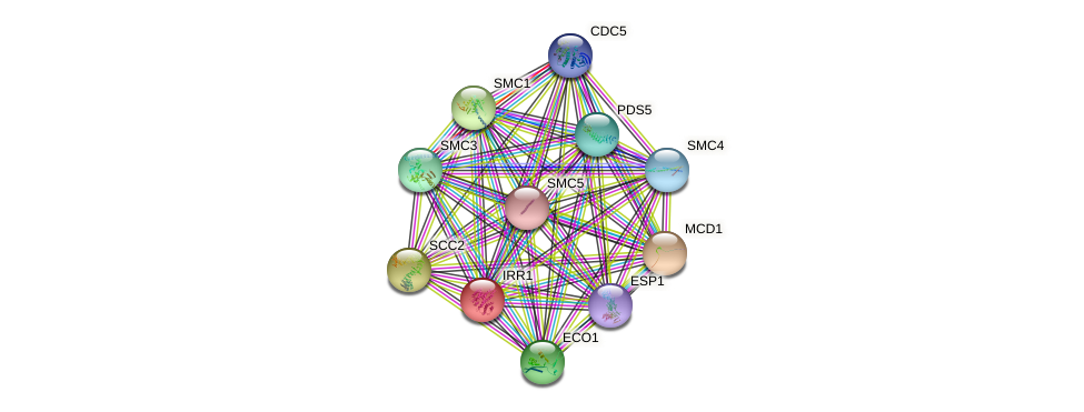 IRR1 protein (Saccharomyces cerevisiae) - STRING interaction network