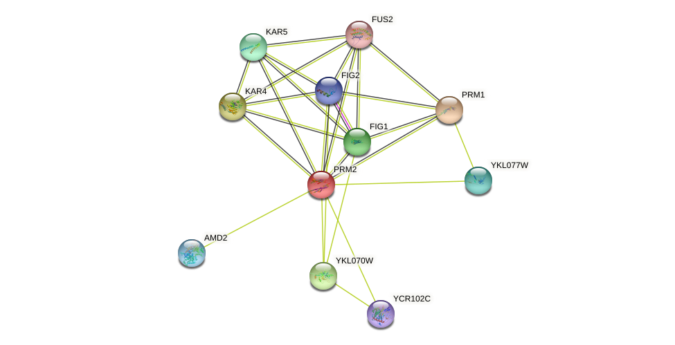 PRM2 protein (Saccharomyces cerevisiae) - STRING interaction network