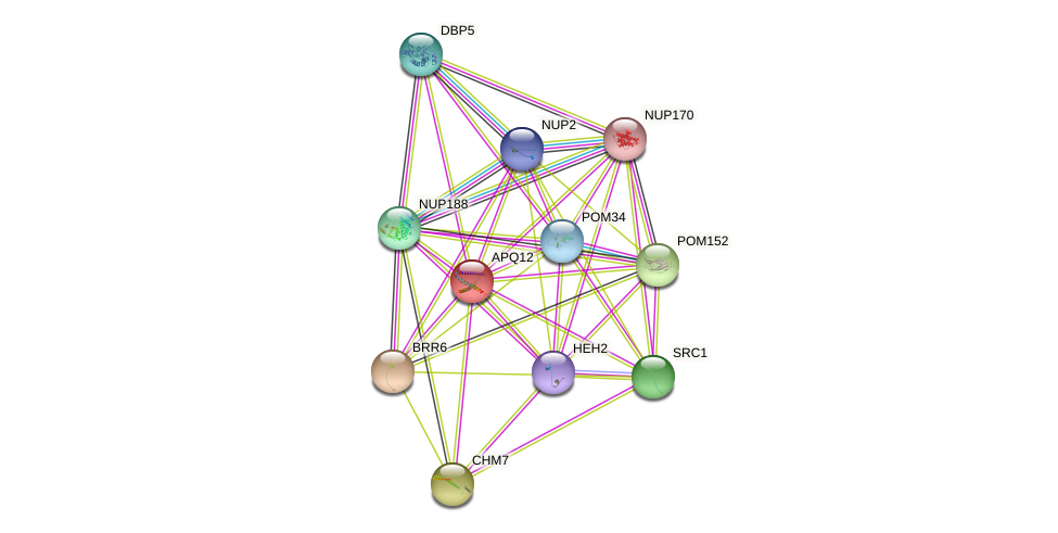 APQ12 protein (Saccharomyces cerevisiae) - STRING interaction network