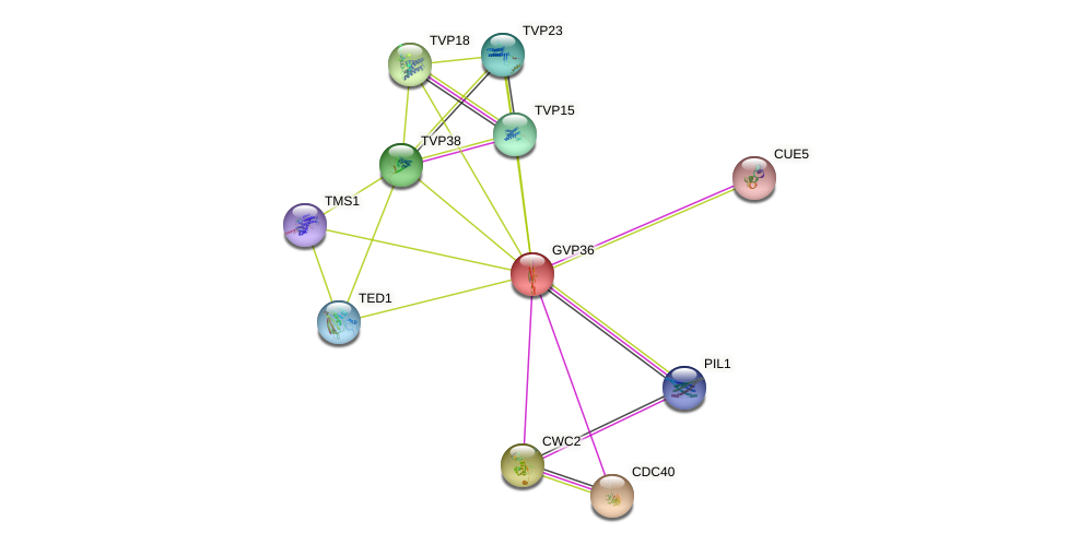 GVP36 protein (Saccharomyces cerevisiae) - STRING interaction network