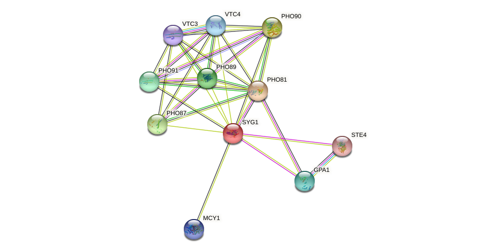SYG1 protein (Saccharomyces cerevisiae) - STRING interaction network