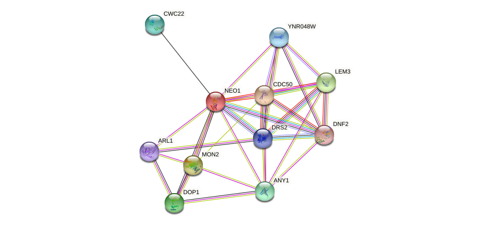 NEO1 protein (Saccharomyces cerevisiae) - STRING interaction network