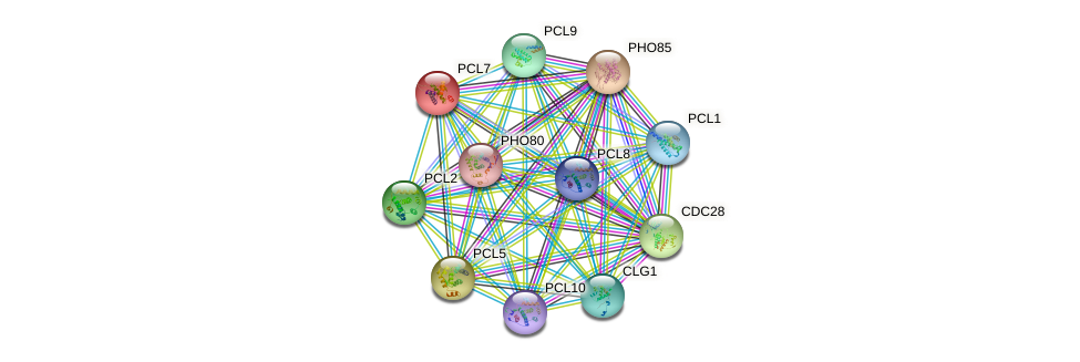 PCL7 protein (Saccharomyces cerevisiae) - STRING interaction network