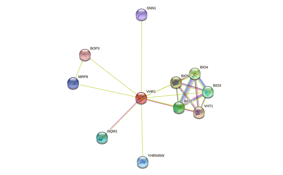 VHR1 protein (Saccharomyces cerevisiae) - STRING interaction network