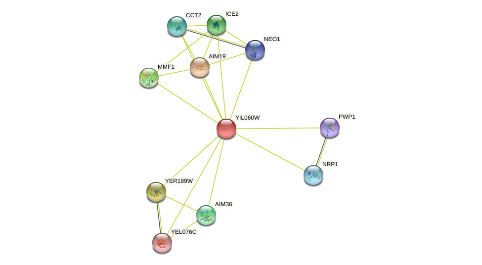 YIL060W protein (Saccharomyces cerevisiae) - STRING interaction network