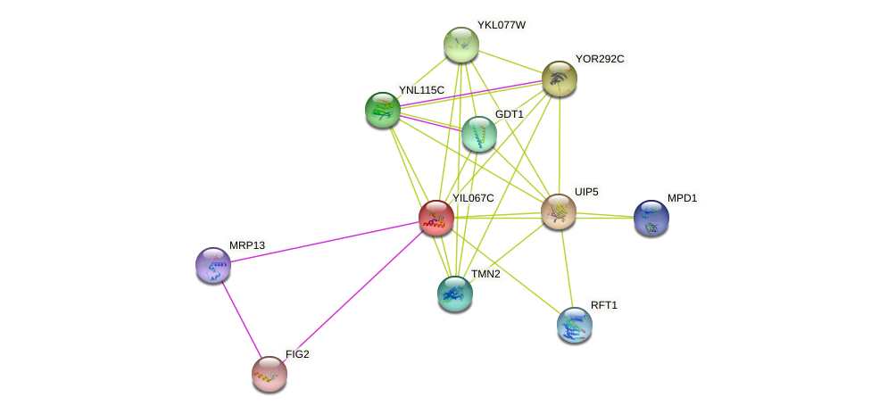 YIL067C protein (Saccharomyces cerevisiae) - STRING interaction network