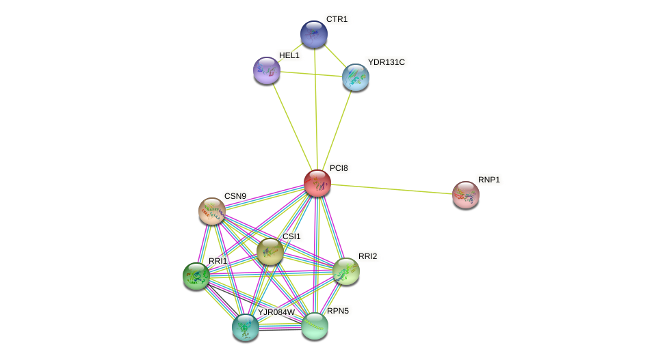 PCI8 protein (Saccharomyces cerevisiae) - STRING interaction network