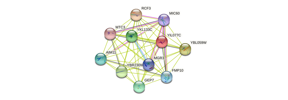 YIL077C protein (Saccharomyces cerevisiae) - STRING interaction network