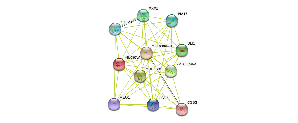 YIL089W protein (Saccharomyces cerevisiae) - STRING interaction network