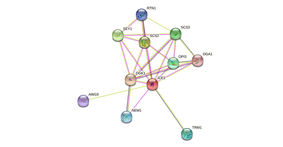 ICE2 protein (Saccharomyces cerevisiae) - STRING interaction network