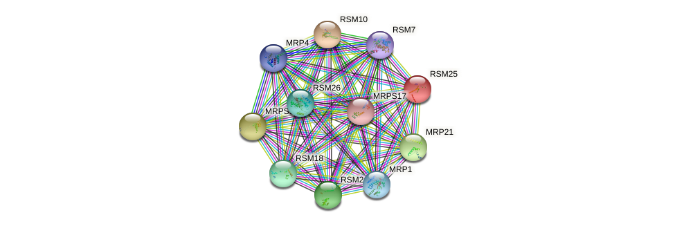 RSM25 protein (Saccharomyces cerevisiae) - STRING interaction network