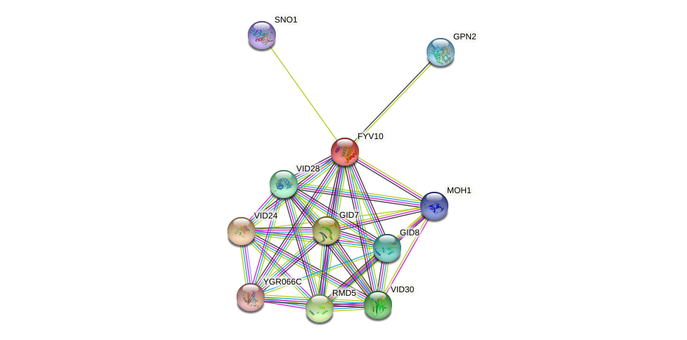 FYV10 protein (Saccharomyces cerevisiae) - STRING interaction network