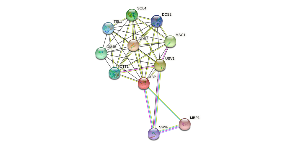 XBP1 protein (Saccharomyces cerevisiae) - STRING interaction network