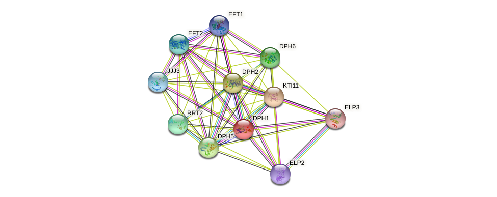 DPH1 protein (Saccharomyces cerevisiae) - STRING interaction network