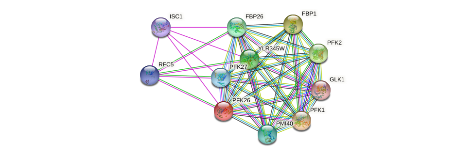 PFK26 protein (Saccharomyces cerevisiae) - STRING interaction network
