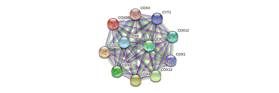 COX5B protein (Saccharomyces cerevisiae) - STRING interaction network