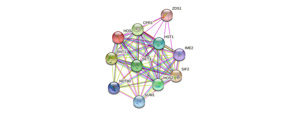 HOS4 protein (Saccharomyces cerevisiae) - STRING interaction network