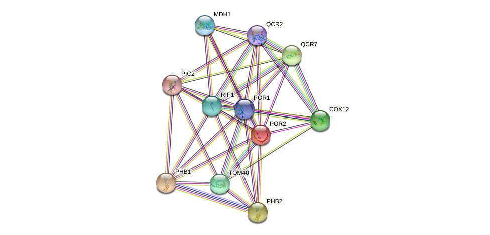 POR2 protein (Saccharomyces cerevisiae) - STRING interaction network