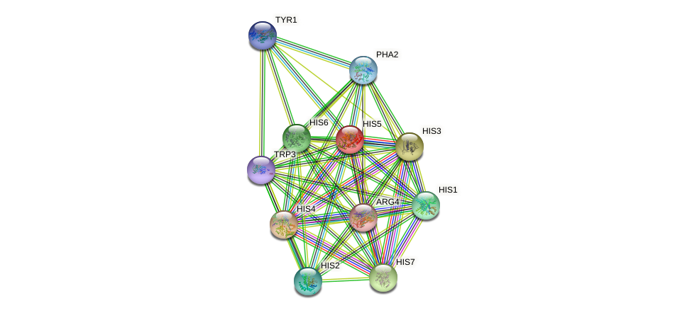 HIS5 protein (Saccharomyces cerevisiae) - STRING interaction network