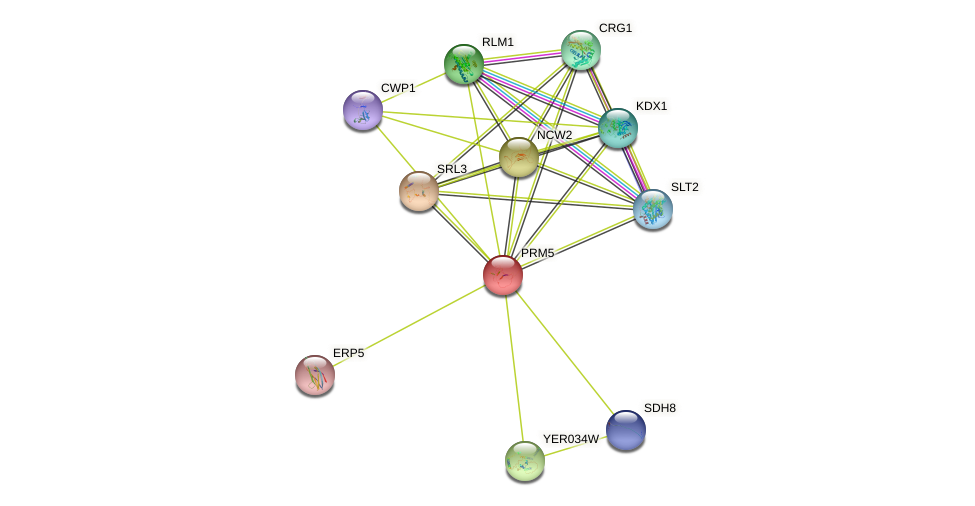 PRM5 protein (Saccharomyces cerevisiae) - STRING interaction network