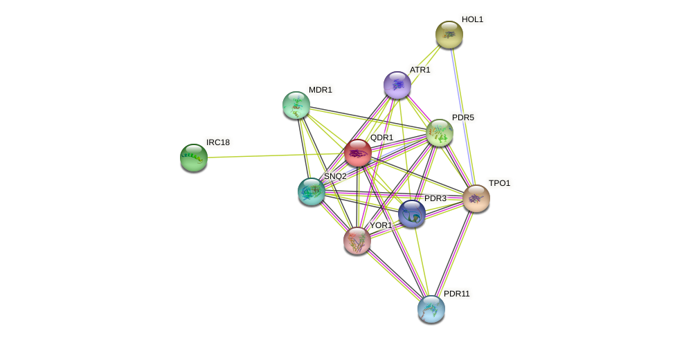QDR1 protein (Saccharomyces cerevisiae) - STRING interaction network