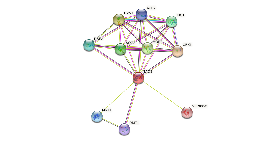 TAO3 protein (Saccharomyces cerevisiae) - STRING interaction network