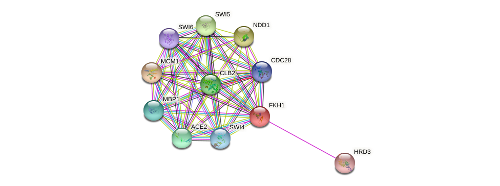 FKH1 protein (Saccharomyces cerevisiae) - STRING interaction network