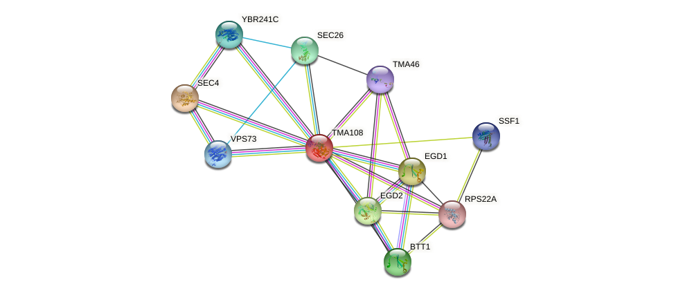 TMA108 protein (Saccharomyces cerevisiae) - STRING interaction network