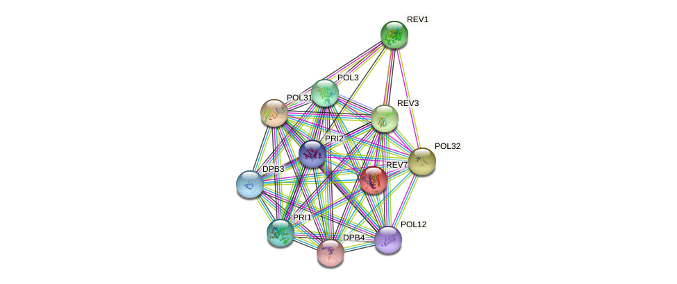 REV7 protein (Saccharomyces cerevisiae) - STRING interaction network