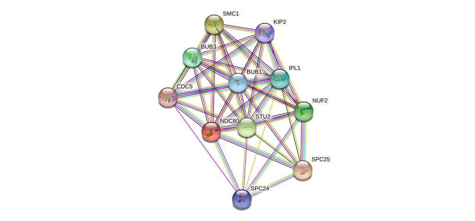 NDC80 protein (Saccharomyces cerevisiae) - STRING interaction network