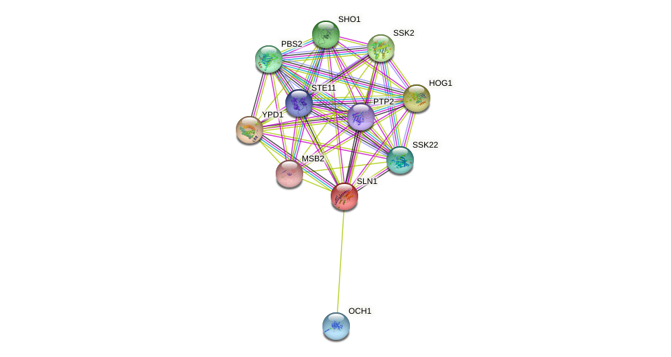 SLN1 protein (Saccharomyces cerevisiae) - STRING interaction network