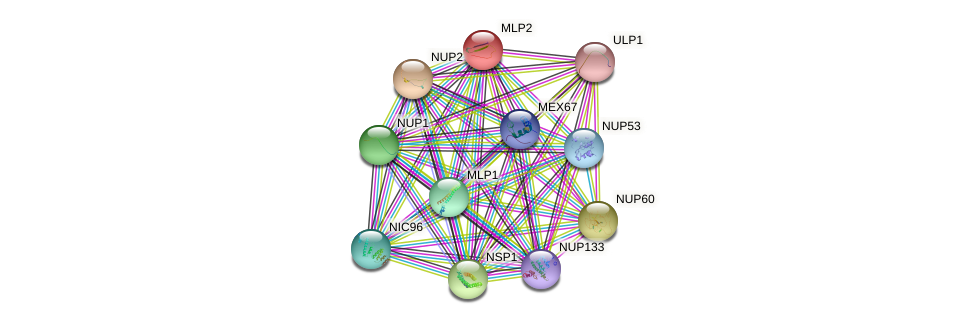 MLP2 protein (Saccharomyces cerevisiae) - STRING interaction network