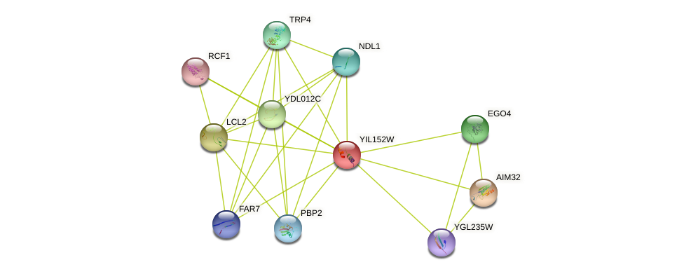 YIL152W protein (Saccharomyces cerevisiae) - STRING interaction network