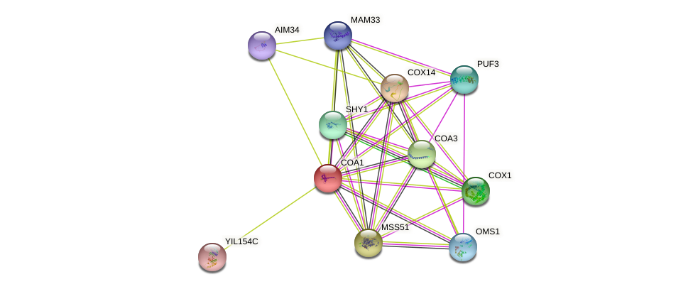 COA1 protein (Saccharomyces cerevisiae) - STRING interaction network