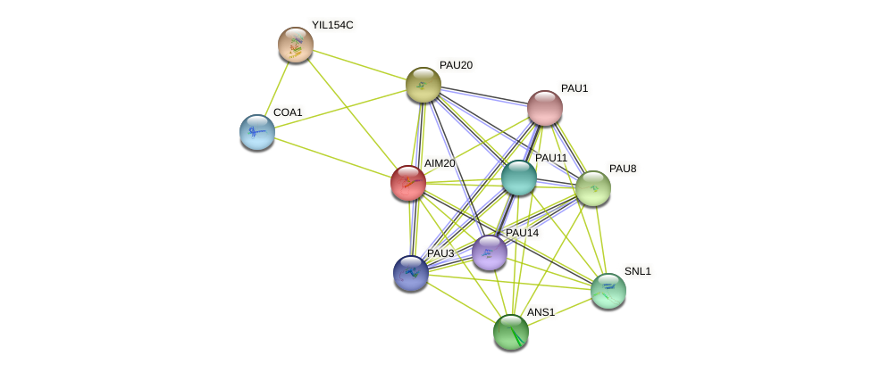 AIM20 protein (Saccharomyces cerevisiae) - STRING interaction network