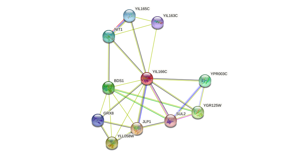 YIL166C protein (Saccharomyces cerevisiae) - STRING interaction network