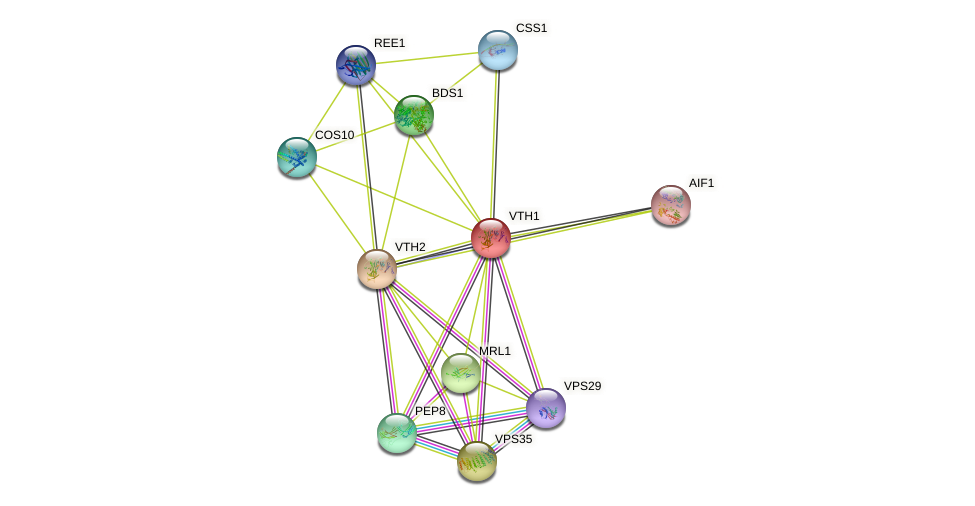 VTH1 protein (Saccharomyces cerevisiae) - STRING interaction network