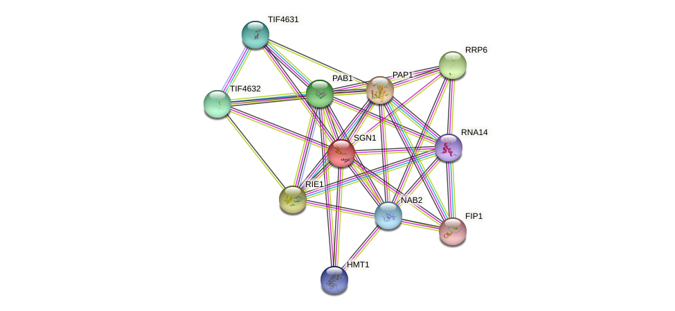 SGN1 protein (Saccharomyces cerevisiae) - STRING interaction network