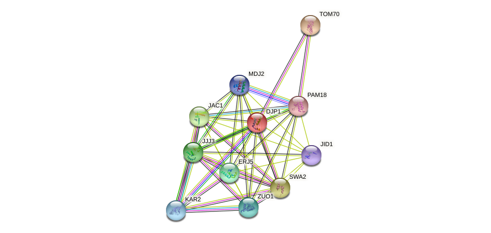 DJP1 protein (Saccharomyces cerevisiae) - STRING interaction network