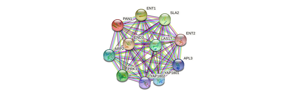 PAN1 protein (Saccharomyces cerevisiae) - STRING interaction network