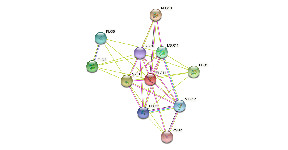 FLO11 protein (Saccharomyces cerevisiae) - STRING interaction network