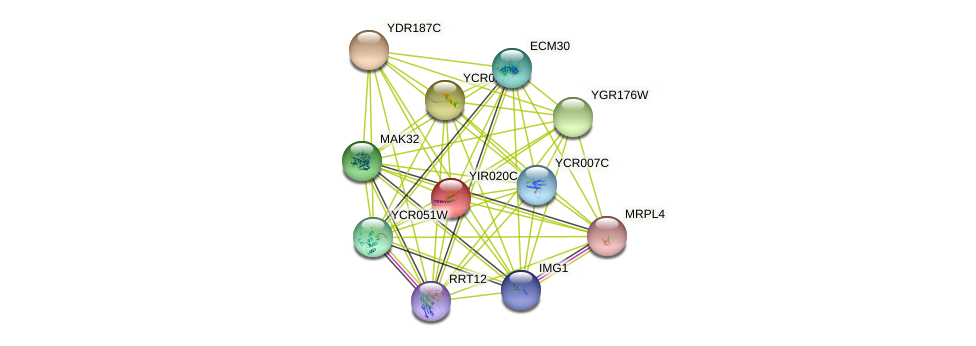 YIR020C protein (Saccharomyces cerevisiae) - STRING interaction network