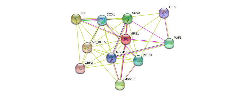 MRS1 protein (Saccharomyces cerevisiae) - STRING interaction network
