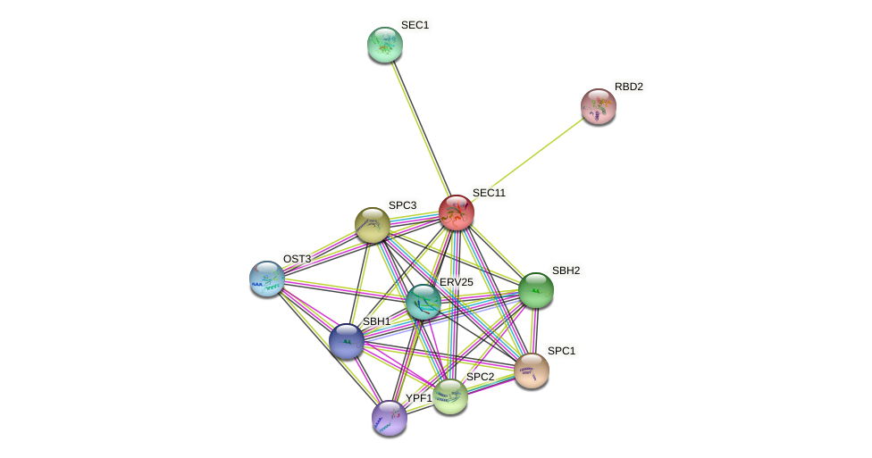 SEC11 protein (Saccharomyces cerevisiae) - STRING interaction network