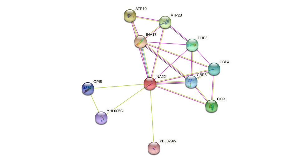 INA22 protein (Saccharomyces cerevisiae) - STRING interaction network