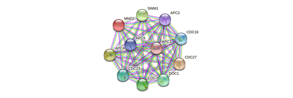 MND2 protein (Saccharomyces cerevisiae) - STRING interaction network