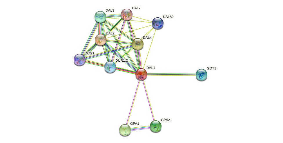 DAL1 protein (Saccharomyces cerevisiae) - STRING interaction network
