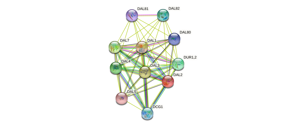 DAL2 protein (Saccharomyces cerevisiae) - STRING interaction network