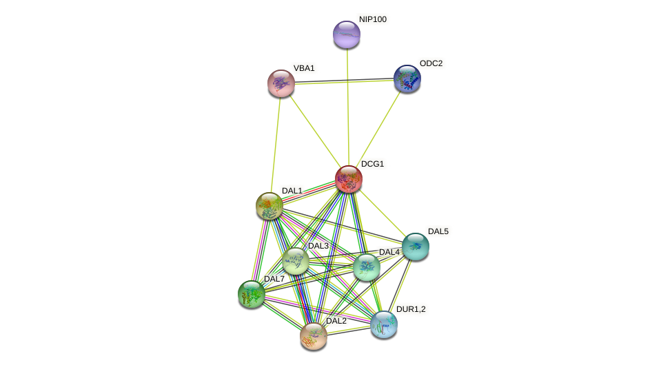DCG1 protein (Saccharomyces cerevisiae) - STRING interaction network